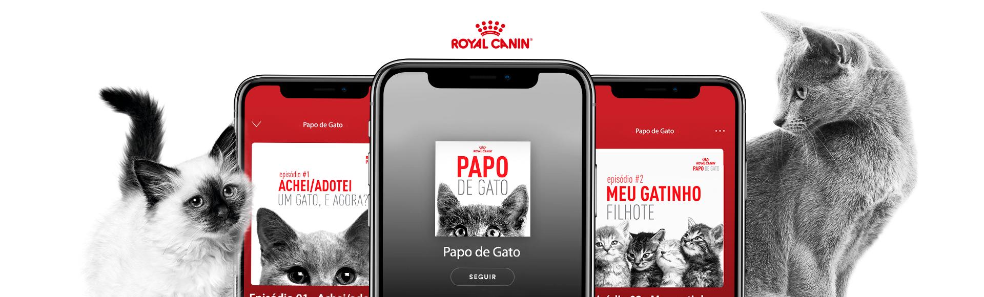 home-hero do case: Papo de Gato - Royal Canin