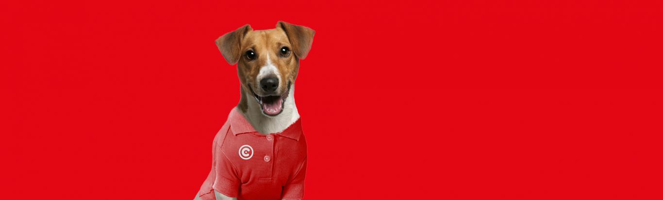 imagem embutida no texto do case: Cãotinente, o cão influente