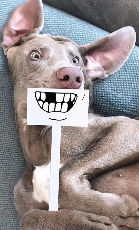 galeria do case: Cãotinente, o cão influente